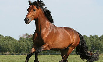 JD-Equine-cover.jpg